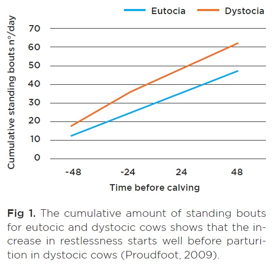 The cumulative amount of standing bouts for eutocic and dystocic cows shows that the increase in restlessness starts well before parturition in dystocic cows