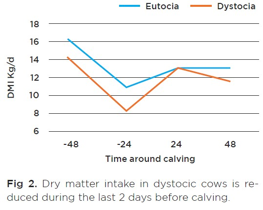 Dry matter intake in dystocic cows is reduced during the last 2 days before calving.